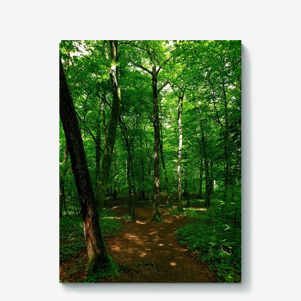Холст «Hidden Forest»