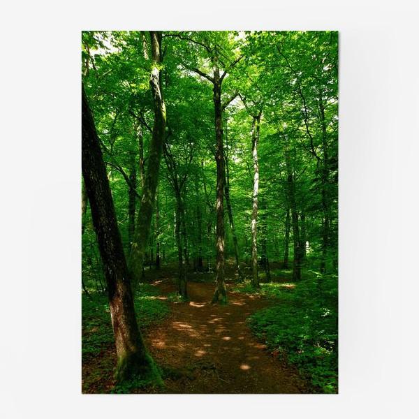 Постер «Hidden Forest»