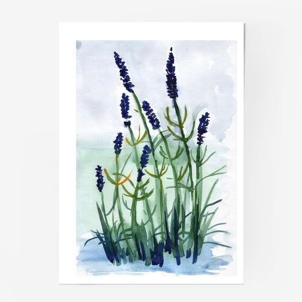 Постер «Фиолетовые цветы»