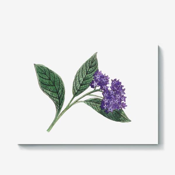 Холст «Ботаника. Веточка гелиотропа»