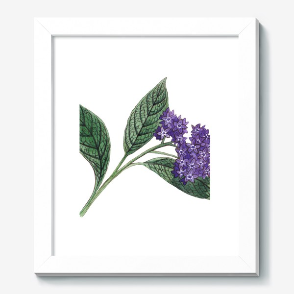 Картина «Ботаника. Веточка гелиотропа»