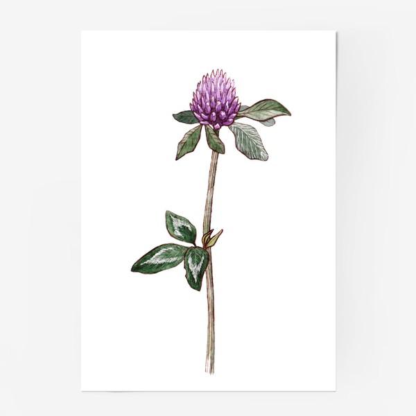 Постер «Ботаника. Цветок клевера»