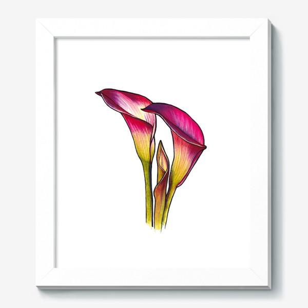 Картина «Розовые каллы»
