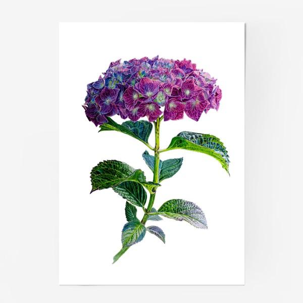 Постер «Цветок Гортензия акварель»
