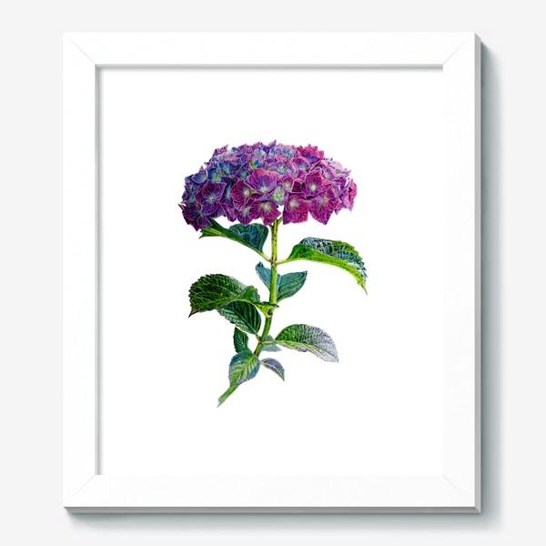 Картина «Цветок Гортензия акварель»