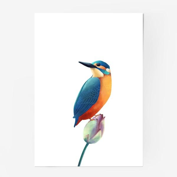 Постер «зимородок»