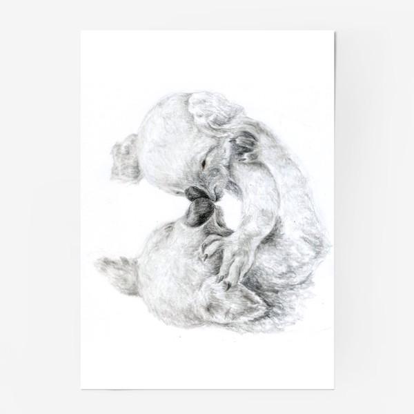 Постер «пара целующихся коала»