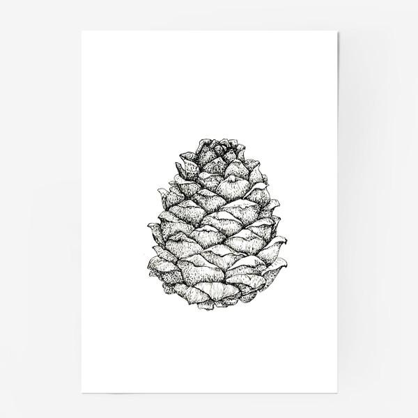 Постер «Кедровая шишка»