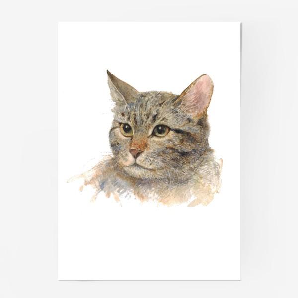Постер «Портрет кота»