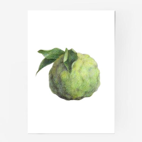 Постер «Цитрус Юзу»