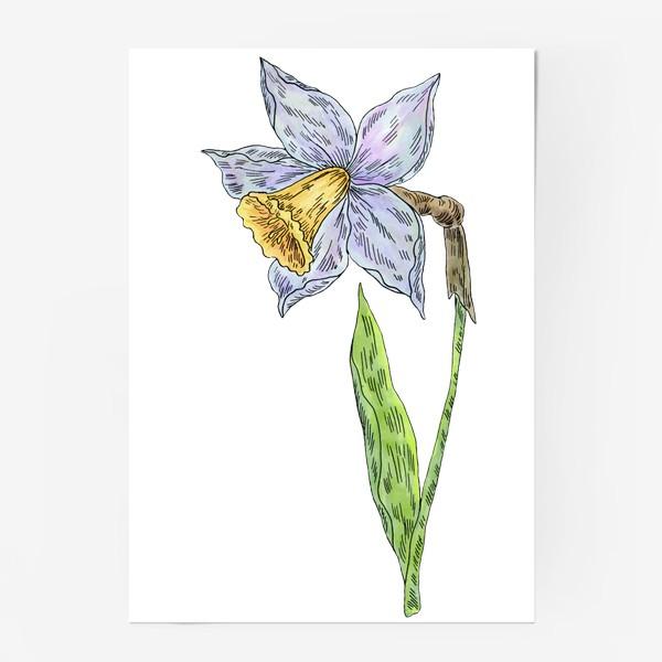 Постер «Весенний нарцисс»