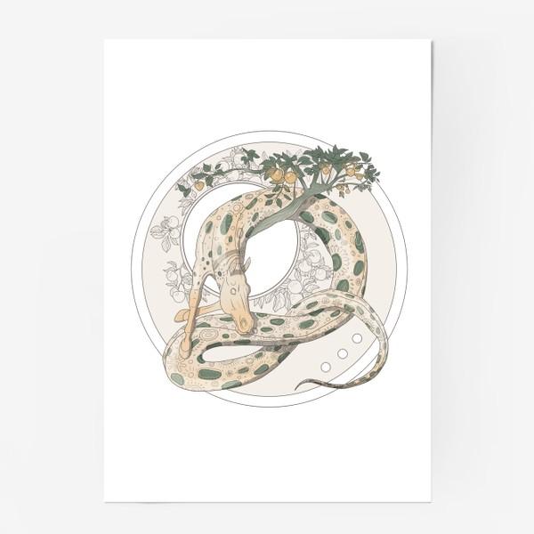 Постер «Snake»