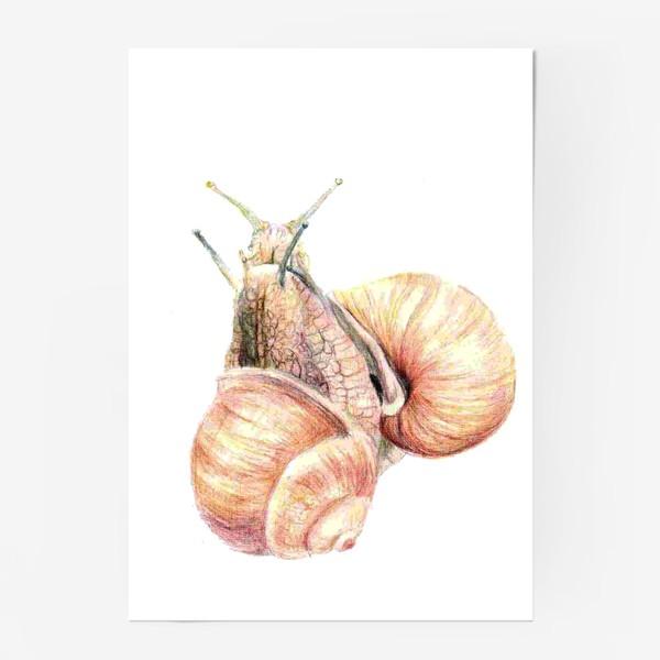 Постер «пара влюбленных улиток (улитка)»