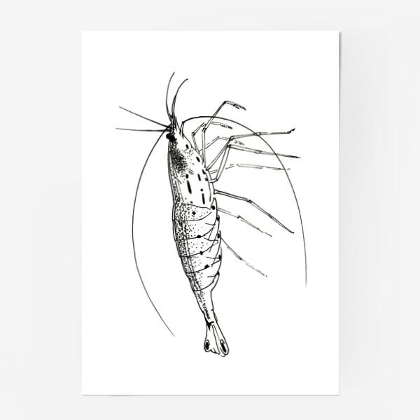 Постер «Креветка Амано»