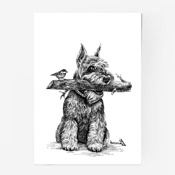 Постер «Шнауцер и птичка»
