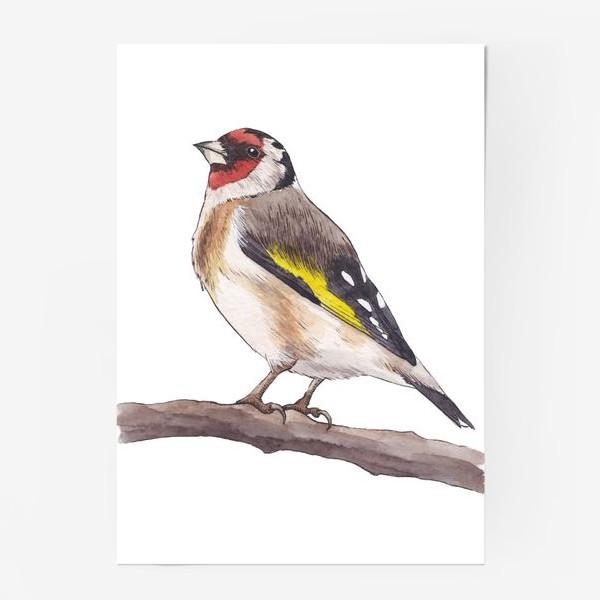 Постер «Птицы. Щегол»