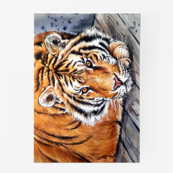 Постер «амурский тигр»