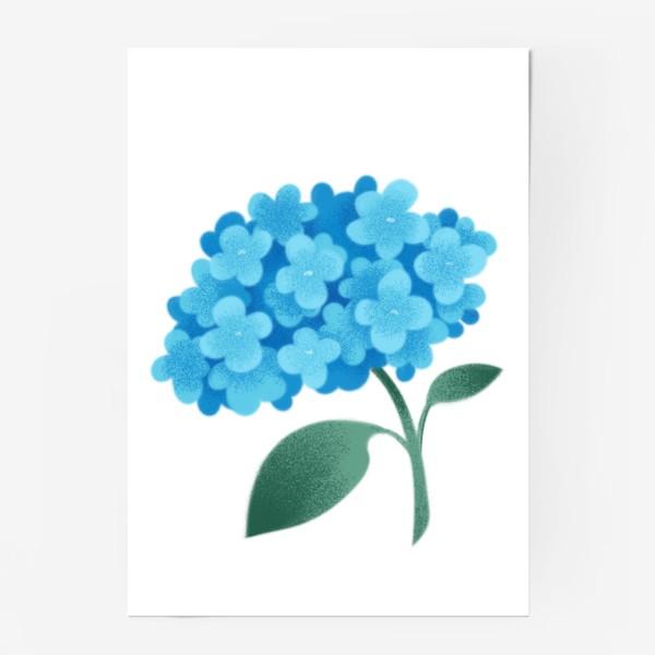 Постер «Цветок плюмбаго»