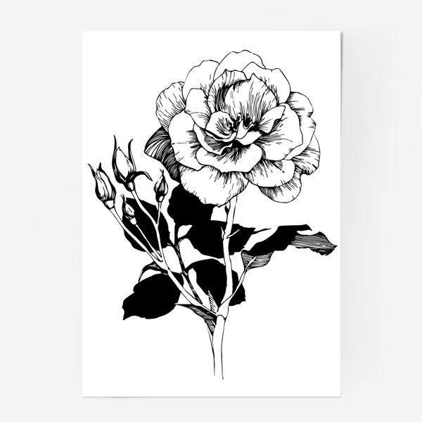 Постер «Роза. Черно-белая графика»