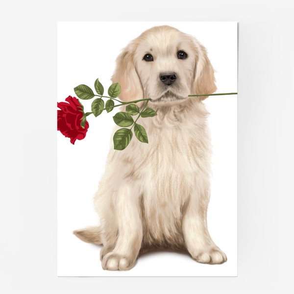 Постер «Golden Retriever with Rose and Love»