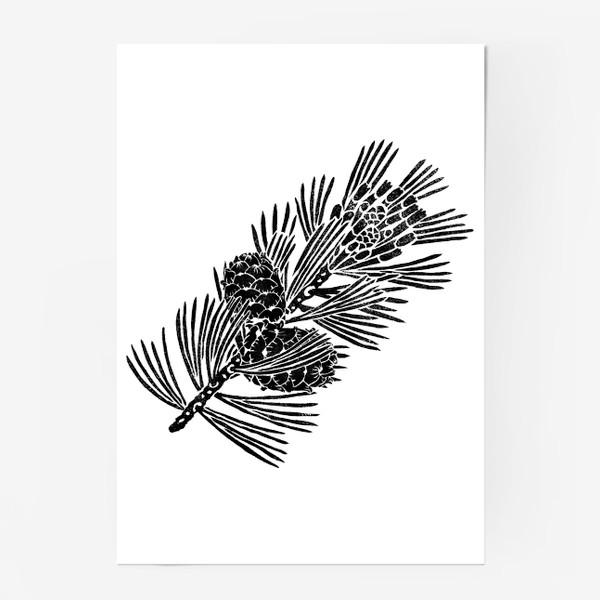 Постер «Кедр-3 (сибирская сосна) в технике линогравюра»