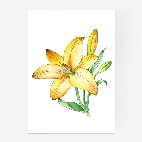 Постер «Желтый лилейник»