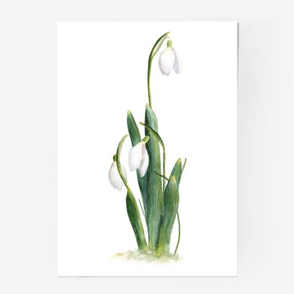 Постер «Нежность самой весны. Подснежники.»
