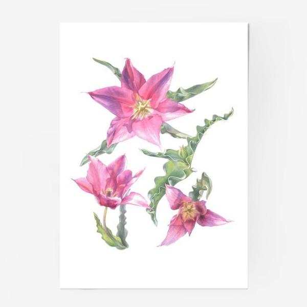 Постер «Сиреневые тюльпаны »