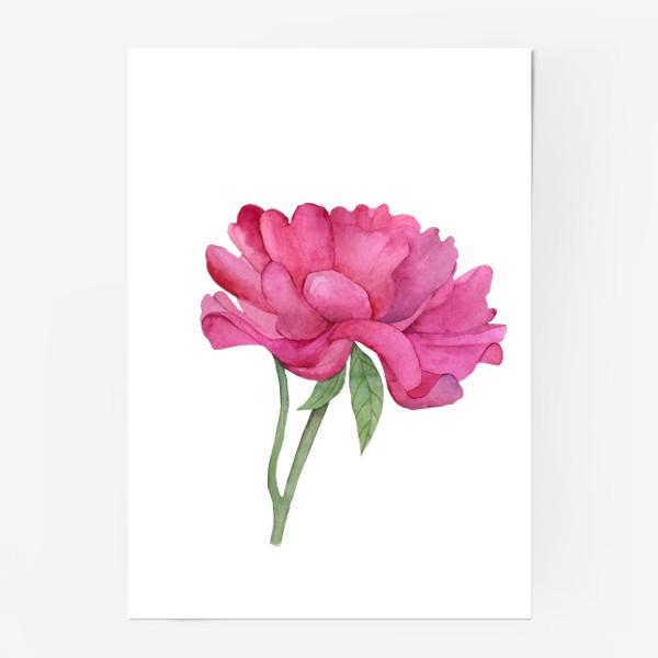 Постер «Розовый пион»