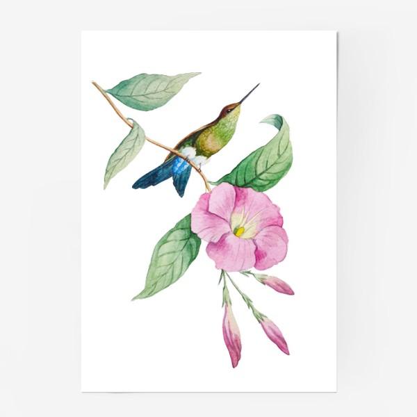 Постер «Колибри с синим хвостом»
