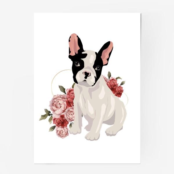 Постер «Собака французский бульдог»