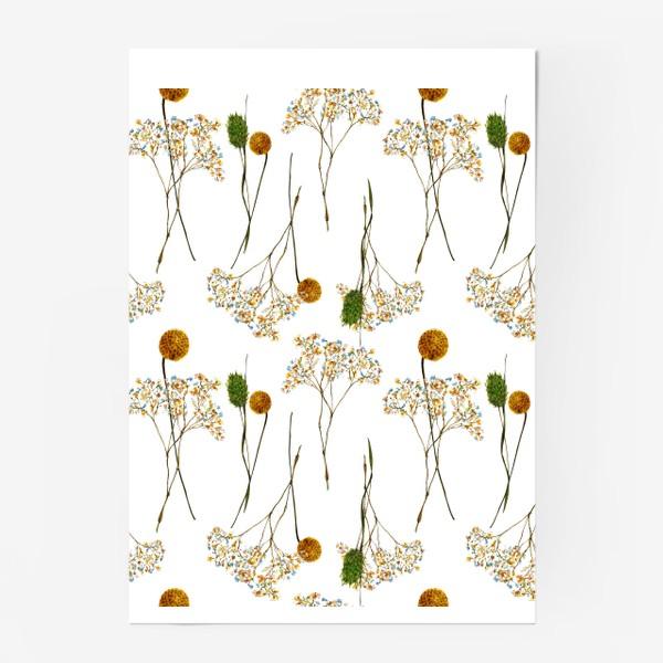 Постер « сухоцветы»