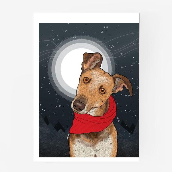 Постер «Собака по имени Нудлс»
