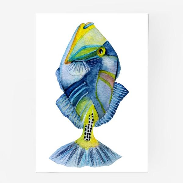 Постер «Рыбка.»