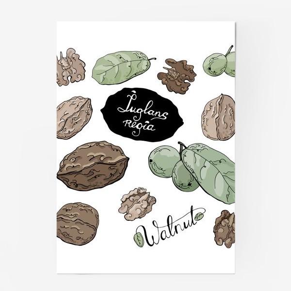 Постер «Грецкий орех во всей красе»