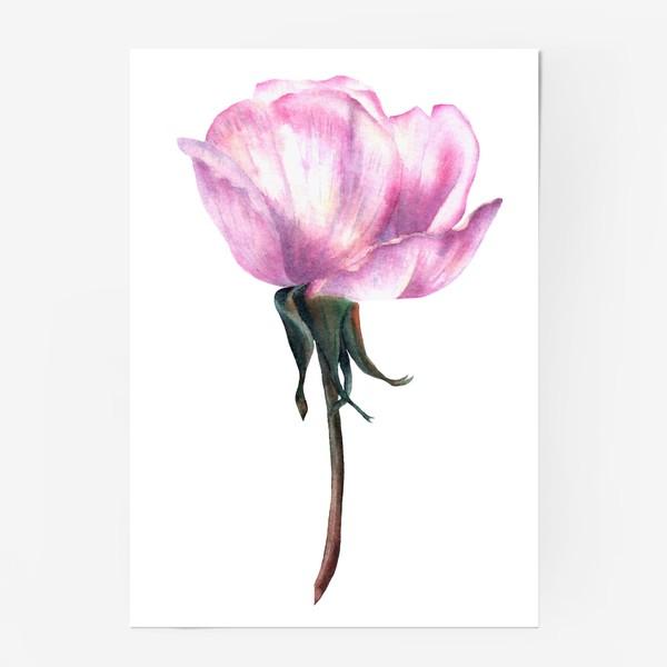Постер «Нежность розы»