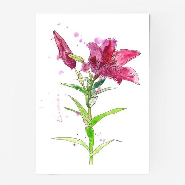 Постер «Розовая лилия»