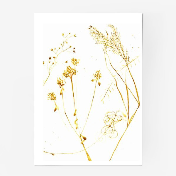 Постер «Сухоцветы»