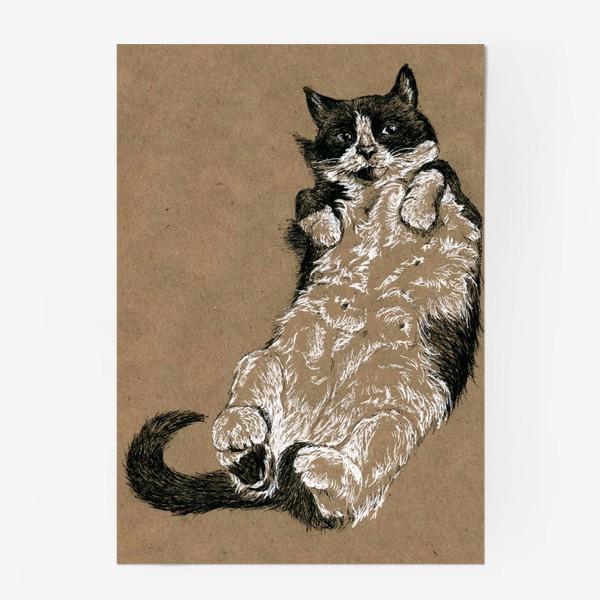 Постер «Чернобелый кот лежит на спине»