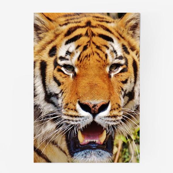 Постер «Тигр»