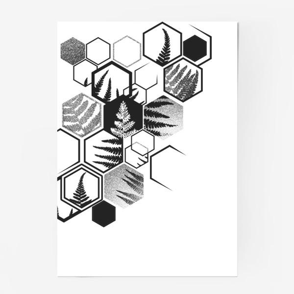 Постер «Hexagonal Fern»