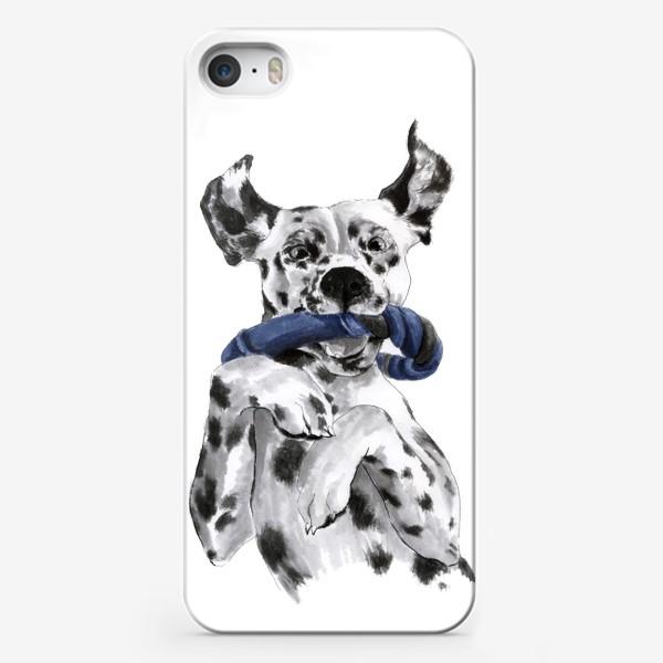 Чехол iPhone «Портрет собаки породы далматинец с игрушкой»