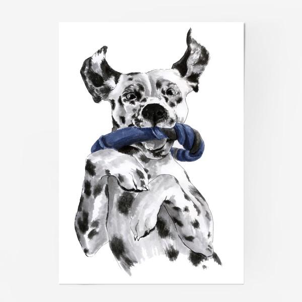 Постер «Портрет собаки породы далматинец с игрушкой»