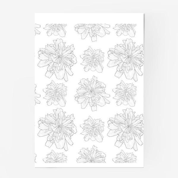 Постер «пион крупный цветок»