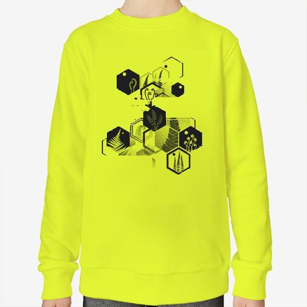 Свитшот «Hexagon Ferns»