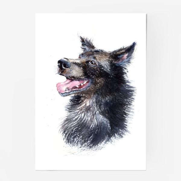 Постер «Собака »
