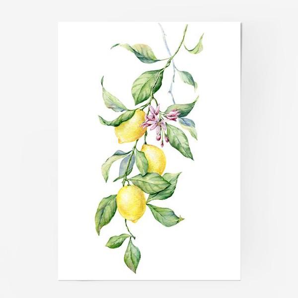 Постер «Ветка с лимонами»