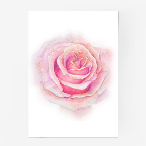 Постер «Роза нежная, как облако»