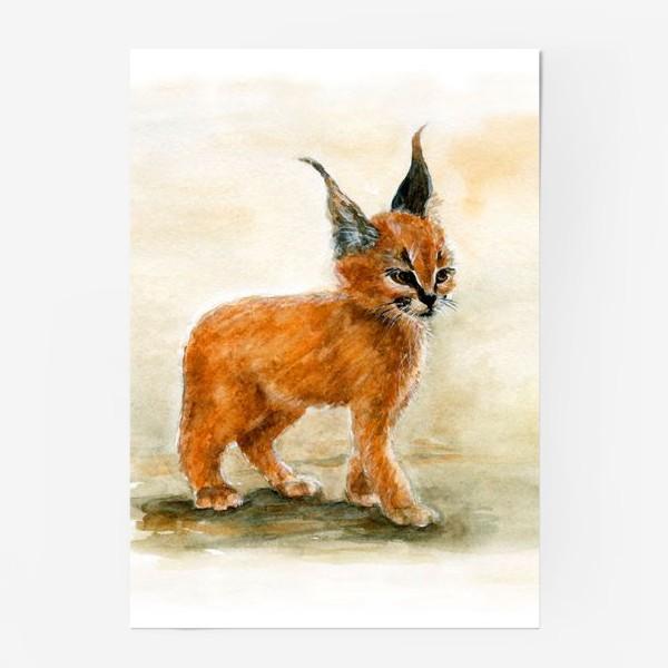 Постер «Маленький, серьезный Рысь.»