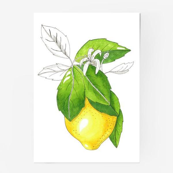 Постер «Сочный лимон»
